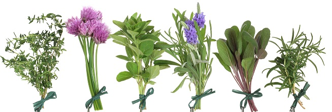 herbs-hanging1