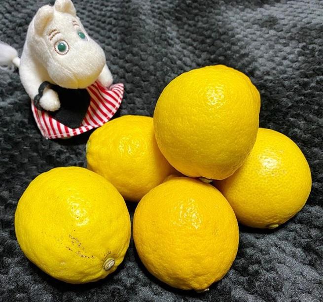 国産レモン_202002_薬膳_塩レモン